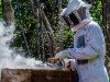 Codevasf beneficia mais de 500 famílias do sertão pernambucano com ações de apicultura