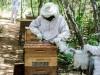 Ação da Codevasf irá incrementar produção de mel de famílias do sertão do Araripe (PE)