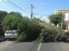 Àrvore cai em cima de veículo no centro de Petrolina